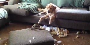 Cães que fizeram arte e tiverem as reações mais engraçadas que se possa imaginar