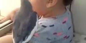 Calopsita cantando para o bebê, olha só que imagem mais fofa!!
