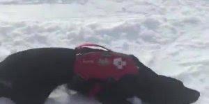 Cão de resgate se divertindo na neve, olha só que aventureiro!!!