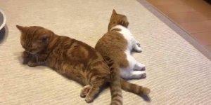 Casal de gatinhos descansando, impossível não amar essas fofuras!