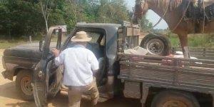 Cavalo acaba de fazer o serviço, sobe no caminhão para ir embora!!!