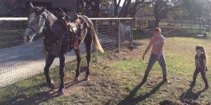Cavalo dançando com duas garotinhas, olha só que fofinhos!!!