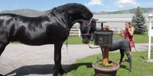 Cavalo de raça lindíssimo, olha só o tamanho dele é maravilhoso!!!
