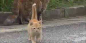 Cinegrafista é surpreendido por um gatinho enquanto gravava uma matéria!!!