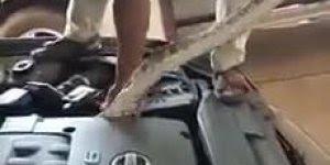 Cobra enorme dentro do motor do carro, confira é inacreditável!!!