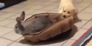 Coelhinho entrou na casinha deste cachorro, olha só o que ele fez, hahaha!!!