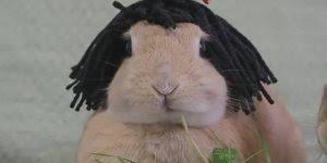 Coelhinho fofinho com rastafári, kkk! Olha só como é lindinha!!!