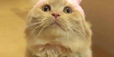 Coelhinho fofinho, só que não, kkk! É um gatinho disfarçado!!!