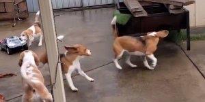 Como fazer seus cachorros se divertirem em casa, confira!