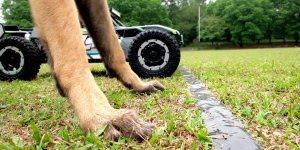 Corrida entre cachorro e carrinho de controle remoto de alta performance!!!