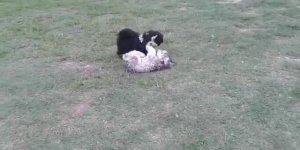 Dois cãezinhos brincando, como são fofinhos estes serumaninhos!!!