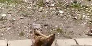 Dois esquilosinhos brigando no acostamento de uma estrada!!!