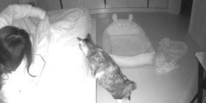 Dona de gatinho o cobrindo de noite, olha só que amor entre os dois!!!