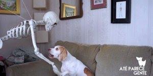 Dono tenta assustar seu cachorrinho com caveira, mas olha só sua reação!!!