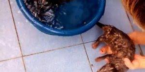 Duas lontrinhas tomando banho, olha como gostam de água, muito fofo!!!