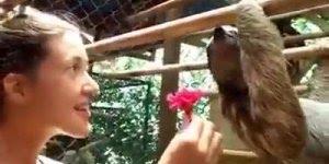 Ela ofereceu uma flor a esse Bicho preguiça, e veja o que aconteceu!!!