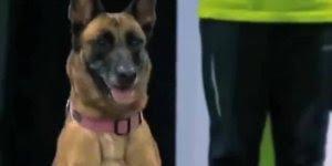 Em uma corrida de cães, o Labrador tem as suas prioridades hahaha!