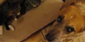 Esse vídeo de animais é muito engraçado, kkk! Da só uma olhada na desse cão!!!