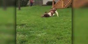 Esse vídeo é especial para todos que amam seus cachorros, olha só que lindos!!!