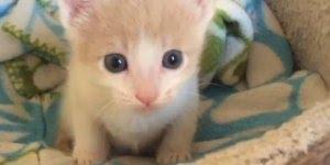 Filhote de gatinho lindo, olha como eu sou fofinho gente!!!