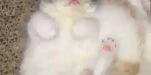 Filhote de gatinho, não existe ser mais fofinho que este, confira!!!