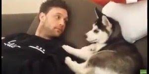 Filhote de Husky discutindo com seu dono, é uma cena linda e divertida!