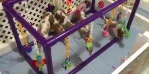 Filhotes brincando com seus brinquedinhos, olha só que legal!!!
