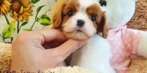 Filhotinhos de cachorro mais fofos da internet, que adoráveis!