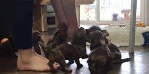 Filhotinhos de cachorro, olha só a quantidade de amiguinhos!!!
