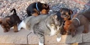 Filhotinhos estão intrigados com este gatinho, olha só a curiosidades deles!!!