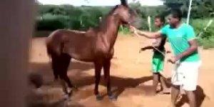 Garoto foi montar no cavalinho bravo, olha só no que deu, kkk!!!