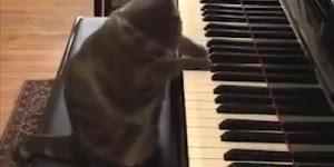 Gatinho adora ouvir o som do piano, olha só que coisinha mais linda!!!