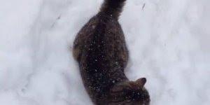 Gatinho brincando na neve, olha como se diverte essa criaturinha!!!