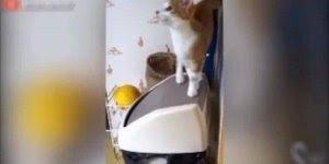 Gatinho caindo dentro da lixeira, os gatos vivem se assustando!!!