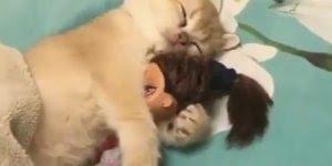 Gatinho dormindo com sua bonequinha preferida, é muita fofura!!!
