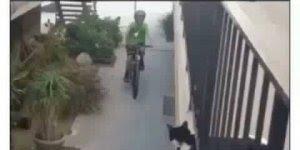 Gatinho fazendo toque com um menino de bicicleta, que fofura!