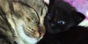 Gatinho tirando uma soneca com seu amiguinho, olha só este olhinhos azuis!!!