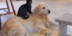 Gatinhos e cachorros, uma mistura constante de amor e ódio, kkk!!!