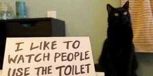 Gatinhos fazendo arte, e vigiando seu dono até na hora do banheiro!!!