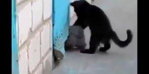 Gato ajuda cachorro um cachorro que estava preso a escapar!!!
