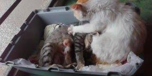 Gato ajudando fêmea a ter filhotes, o vídeo mais impressionante que você já viu!