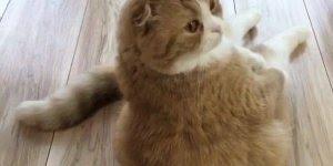 Gato amarelo sentado igual gente, que animal mais lindo, confira!