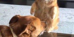 Gato batendo no cachorro, parece mais briga de marido e mulher hahaha!