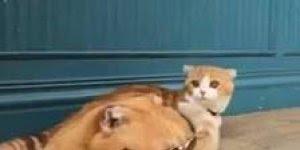 Gato com óculos escuro, esse sim arrasou no visual hein!!!