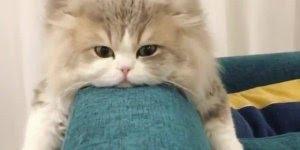 Gato descansando no sofá, mas de um jeito bem diferente hahaha!