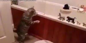 Gato põe todos os bichos para tomar banho, mas ele não vai hahaha!