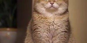 Gato super fofo recebendo carinho, tem como não amar esses bichinhos?