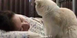 Gato tentando acordar a sua dona, com tanto carinho será que ela acorda?