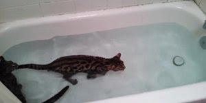 Gato tomando banho, quem disse que gato não gosta de água olha só!!!