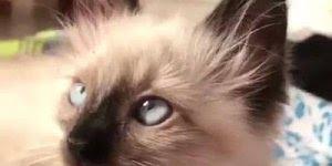 Gato Vitas - Por essa você não esperava, tem de tudo na internet!